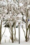 Birdhouse by Crepe Myrtles Covered in snow Royalty Free Stock Photo
