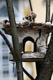 Birdhouse d'un bouleau Photos libres de droits