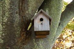 Birdhouse dans l'arbre moussu Photographie stock libre de droits