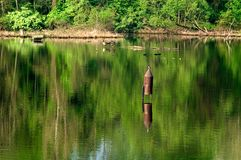 Birdhouse dans le lac Images stock
