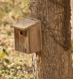 Birdhouse do cedro nas madeiras fotografia de stock royalty free