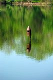 Birdhouse en agua Fotografía de archivo