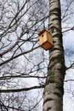 Birdhouse en el tronco de un abedul Fotografía de archivo libre de regalías