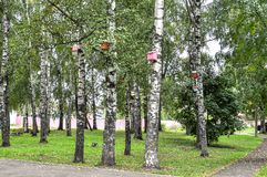 Birdhouse en un árbol foto de archivo