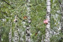 Birdhouse en un árbol fotos de archivo libres de regalías