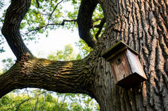 Birdhouse en un árbol Fotografía de archivo libre de regalías