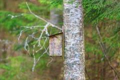 Birdhouse en un árbol de abedul Foto de archivo libre de regalías