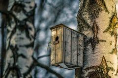 Birdhouse en un abedul Imagen de archivo libre de regalías