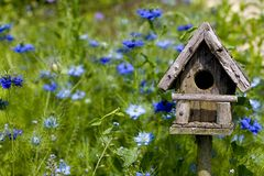 Birdhouse entre as flores Fotografia de Stock Royalty Free