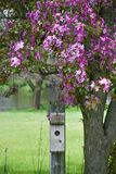 Birdhouse with Flowering Crab Apple Tree. A wooden birdhouse on a stack being framed by a spring flowering pink crab apple tree full of blossoms stock photos