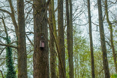 Birdhouse in a forest royalty free stock photography