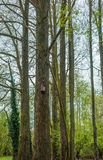 Birdhouse in a forest stock images