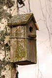 Birdhouse in forest. Stock Photos