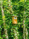 Birdhouse in the forest Stock Photography