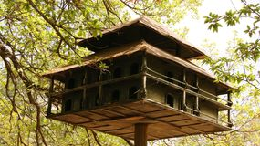 Birdhouse in the forest Stock Image