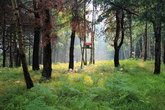 Birdhouse in Forest Stock Photography