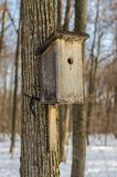 Birdhouse in the forest stock photo