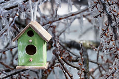 Birdhouse hanging on ice covered tree branches Royalty Free Stock Photo