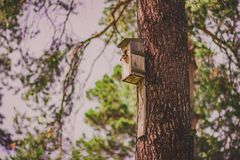 A birdhouse hanging on a pine tree royalty free stock image