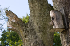 Birdhouse hanging on tree Royalty Free Stock Images