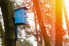 Birdhouse hanging on tree. Royalty Free Stock Photos