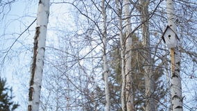 Birdhouse hanging on a tree in winter forest of deciduous and coniferous woods. Nesting box nailed to a birch. It is painted white, the entrance to dwelling is stock footage