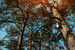 Birdhouse hanging on a tree in the woods stock photo