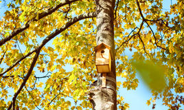 Birdhouse on a high tree Royalty Free Stock Image