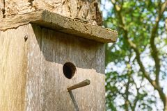 Birdhouse with hole and landing peg. Close-up of wooden birdhouse on a tree with hole and landing peg against a blurred green background with branches royalty free stock image
