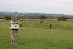 Birdhouse and horses in a fiel Stock Images