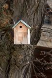 Birdhouse house for small birds nailed to a massive tree with ornate texture bark royalty free stock photography