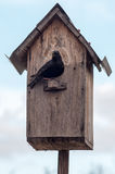 Birdhouse with its inhabitant starling Royalty Free Stock Image