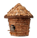 Birdhouse with little sparrow Stock Image