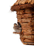 Birdhouse with little sparrow Royalty Free Stock Image