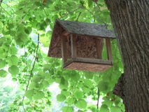 Birdhouse. Look at the tree! It's a birdhouse Royalty Free Stock Image