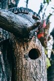 Wooden birdhouse on a tree royalty free stock images