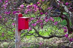 Birdhouse and Magnolia Royalty Free Stock Photography
