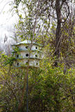 Birdhouse for Marlins in Woods Royalty Free Stock Images