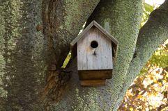 Birdhouse in Mossy tree Royalty Free Stock Photography