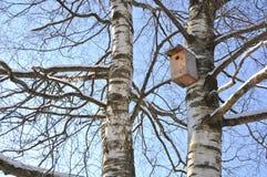 Birdhouse na bagażniku brzoza Fotografia Stock