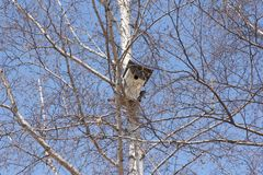 Birdhouse na białej brzozy drzewie Zdjęcia Stock