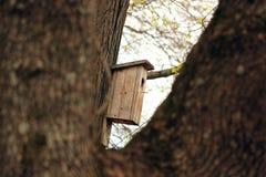 Birdhouse na drzewie Wiosna zdjęcie royalty free