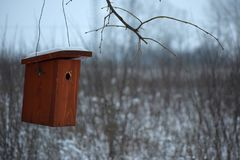 Birdhouse na gałąź w zimie Fotografia Stock