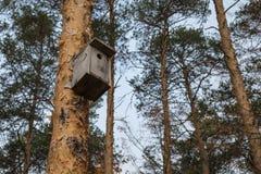 Birdhouse na sośnie zdjęcie stock