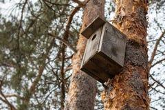 Birdhouse na sośnie zdjęcia royalty free