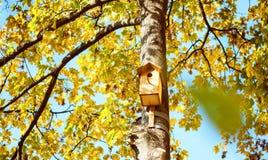 Birdhouse na wysokim drzewie Obraz Royalty Free