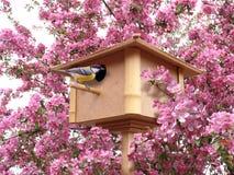 Birdhouse no jardim de florescência cor-de-rosa fotografia de stock