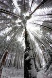 Birdhouse obwieszenie na drzewie fotografia stock
