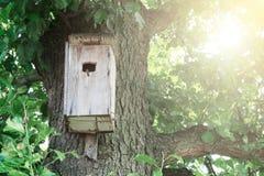 Birdhouse obwieszenie na drzewie, schronienie dla ptaków fotografia royalty free