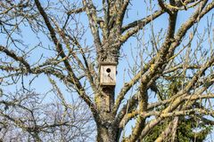 Birdhouse on an old branching tree without leaves in early spring royalty free stock photos